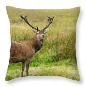Wild Deer Animals   Throw Pillow
