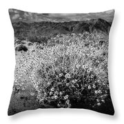 Wild Desert Flowers Blooming In Black And White In The Anza-borrego Desert State Park Throw Pillow