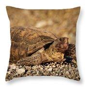 Wild Desert Tortoise Saguaro National Park Throw Pillow by Steve Gadomski