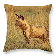 Wild Dog Of Botswana Throw Pillow