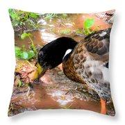 Wild Duck Mallard 1 Throw Pillow