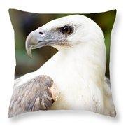 Wild Eagle Throw Pillow