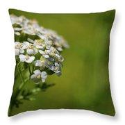 Wild Field Flowers Throw Pillow