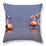 Wild Flamingos Throw Pillow