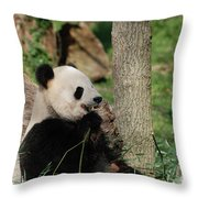 Wild Giant Panda Bear Eating Bamboo Shoots Throw Pillow