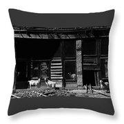 Wild Goats Ghost Town White Oaks New Mexico 1968 Throw Pillow