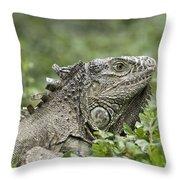 Wild Green Iguana Iguana Iguana At Los Throw Pillow
