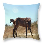 Wild Horses Desert Of Mexico Throw Pillow