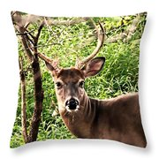 Wild In The Country Throw Pillow