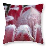 Wild King Protea Throw Pillow