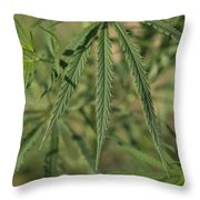 Wild Marijuana Leaves Near Burwell, Ne Throw Pillow