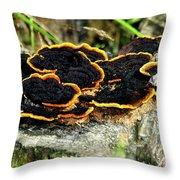Wild Mushrooms Growing On Tree Trunk Throw Pillow