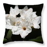 Wild Olive Tree Bloom Throw Pillow