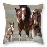 Wild Pinto Family Throw Pillow by Carol Walker
