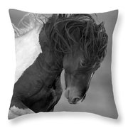 Wild Pinto Stallion Throw Pillow