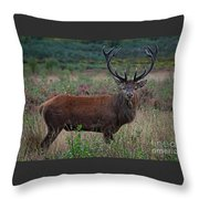 Wild Red Deer Stag Throw Pillow