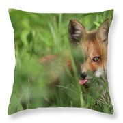 Wild Red Fox Puppy Throw Pillow