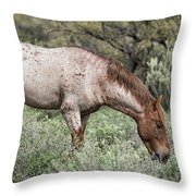 Wild Roan Stallion  Throw Pillow