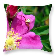 Wild Rose And The Spider Throw Pillow