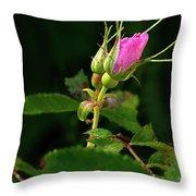 Wild Rosebud Throw Pillow