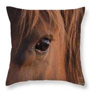 Wild Stallion's Eye Throw Pillow