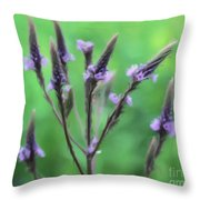 Wild Vervain Throw Pillow