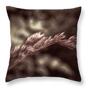 Wild Wheat Throw Pillow