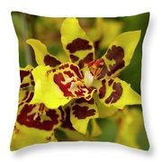 Wildcat Doris Orchid Throw Pillow