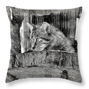 Wildcat - Impressions Throw Pillow