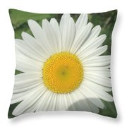 Wilddaisy Throw Pillow