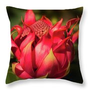 Wildflower Waratah Throw Pillow