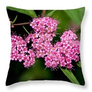 Wildflowers Come In Many Sizes Throw Pillow
