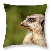 Wildlife Observation Throw Pillow