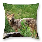 Wiley Coyote Throw Pillow