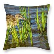 Willet Feeding In The Marsh 2 Throw Pillow