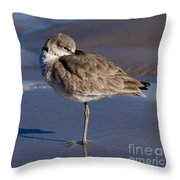 Willet Resting At The Beach Throw Pillow