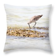 Willet Set 2 Of 4 By Darrell Hutto Throw Pillow