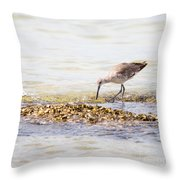 Willet Set 4 Of 4 By Darrell Hutto Throw Pillow