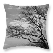 Wind Blown Throw Pillow by Catherine Reusch Daley