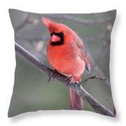 Windblown Cardinal Throw Pillow