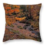 Winding Brook Throw Pillow
