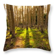 Windsor Trail At Dusk - Santa Fe National Forest New Mexico Throw Pillow