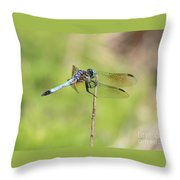Windswept Dragonfly Throw Pillow