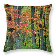 Windy Day Autumn Colors Throw Pillow