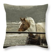 Windy In Mane Throw Pillow