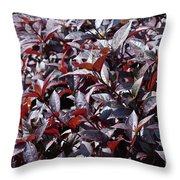 Wine Colored Plants,  Throw Pillow