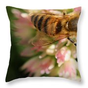 Wing And A Prayer Throw Pillow