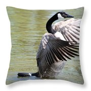 Wing Drying Throw Pillow