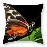 Wing Texture Of Eueides Isabella Longwing Butterfly On A Leaf Ag Throw Pillow
