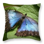 Wingdrops Throw Pillow